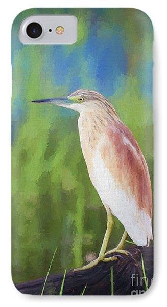 Squacco Heron Ardeola Ralloides IPhone Case by Liz Leyden