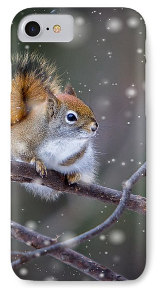 IPhone Case featuring the photograph Squirrel Balancing Act by Patti Deters