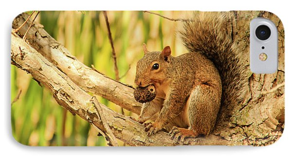 Squirrel In A Tree In The Marsh IPhone Case