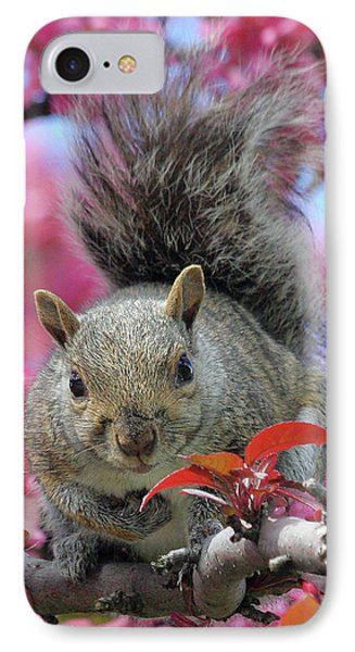 IPhone Case featuring the photograph Squirrel In Apple Blossoms by Doris Potter