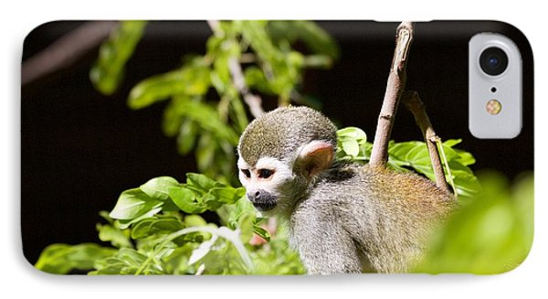 Squirrel Monkey Youngster IPhone Case by Afrodita Ellerman