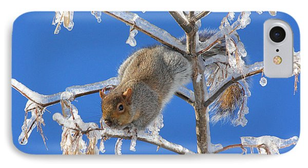 IPhone Case featuring the photograph Squirrel On Icy Branches by Doris Potter