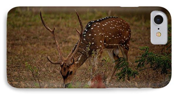 Sri Lankan Axis Deer IPhone Case