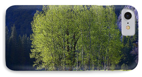 Stand Of Trees Yosemite Valley Phone Case by Garry Gay