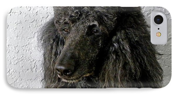 Standard Poodle IPhone Case by Terri Mills