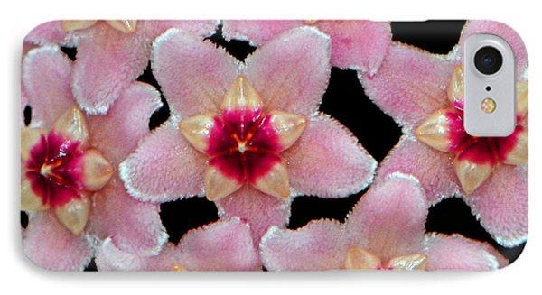 Stapelia Hirsuta - Starfish Flower 002 IPhone Case by George Bostian