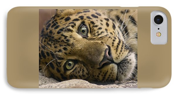 Stare Down IPhone Case by Cheri McEachin