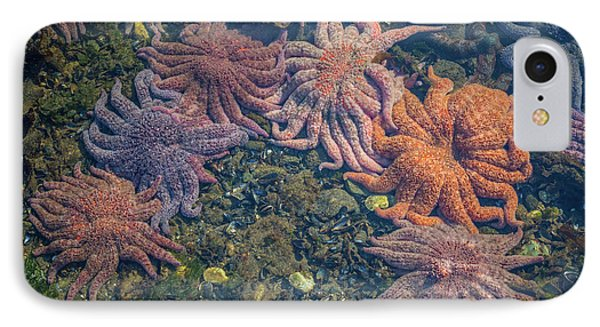 Starfish IPhone Case by Wild Montana Images