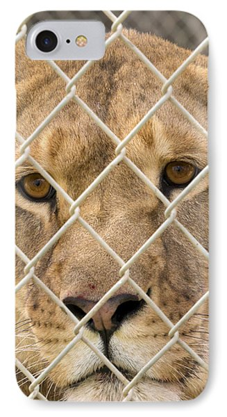Staring Lioness IPhone Case by Travis Rogers