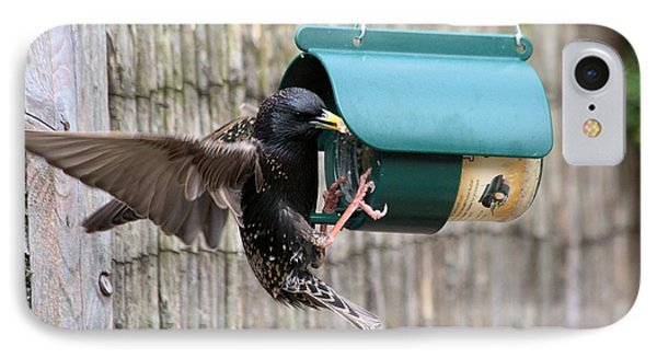 Starling On Bird Feeder Phone Case by Gordon Auld