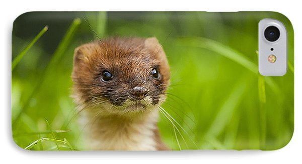 Stoat Portrait IPhone Case by Paul Neville