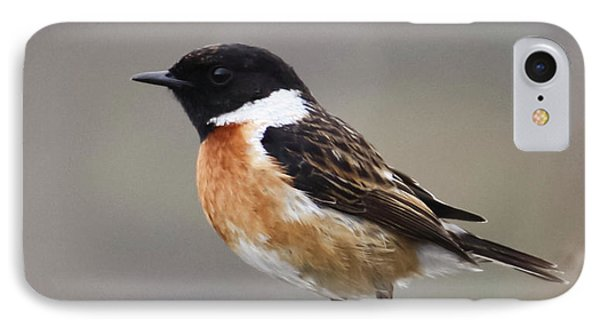 Stonechat IPhone Case by Terri Waters