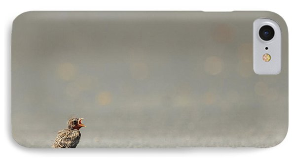 Story Of The Baby Chipping Sparrow 3 Of 10 IPhone Case by Joni Eskridge