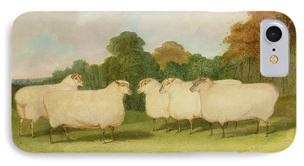 Sheep iPhone 7 Case - Study Of Sheep In A Landscape   by Richard Whitford