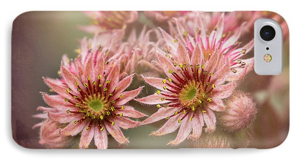 Succulent Flowers - 365-100 IPhone Case by Inge Riis McDonald