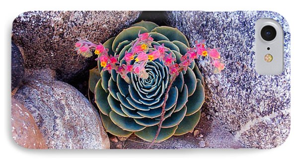 Succulent Flowers IPhone Case by Mark Barclay