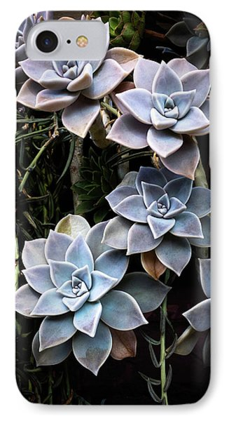 IPhone Case featuring the photograph Succulents Graptopetalum Paraguayense     by Catherine Lau