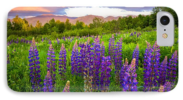 Sugar Hill Lupines IPhone Case by Robert Clifford
