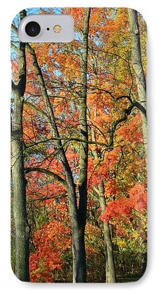 IPhone Case featuring the photograph Sugar Maple Brilliance by Ray Mathis