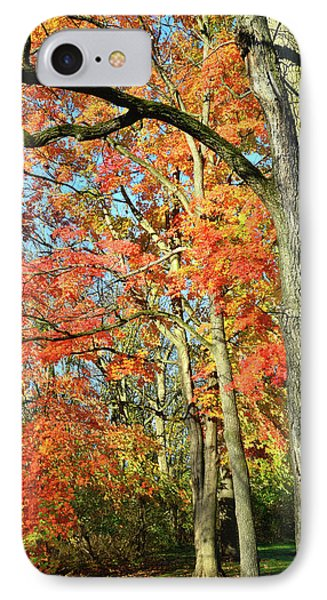 IPhone Case featuring the photograph Sugar Maple Stand by Ray Mathis