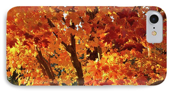 IPhone Case featuring the photograph Sugar Maple Sunset by Ray Mathis