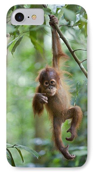 Sumatran Orangutan Pongo Abelii One IPhone Case by Suzi Eszterhas
