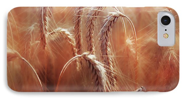 Summer Corn IPhone Case by Agnieszka Mlicka