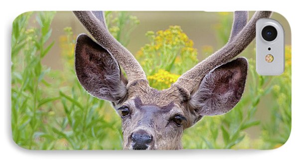 Summer Mule Deer IPhone Case by Jack Bell