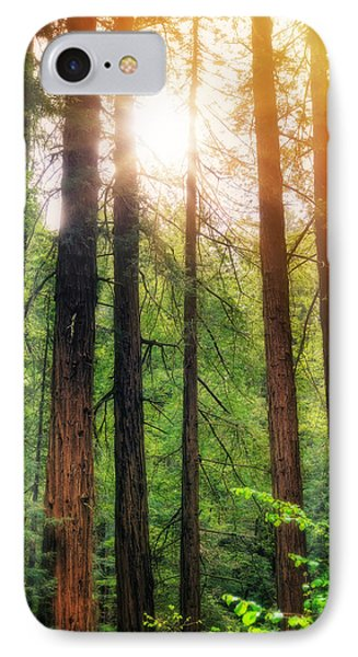 Sun Bursting Through California Redwoods Tress - Muir Woods IPhone Case