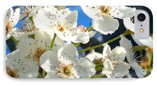 #sun Drenched #tree #blossoms So Sweet IPhone Case by Shari Warren