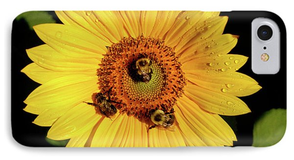 Sunflower And Bees IPhone Case by Nancy Landry