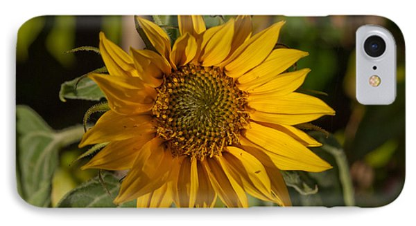 Sun Flower IPhone Case by Lynn Hughes