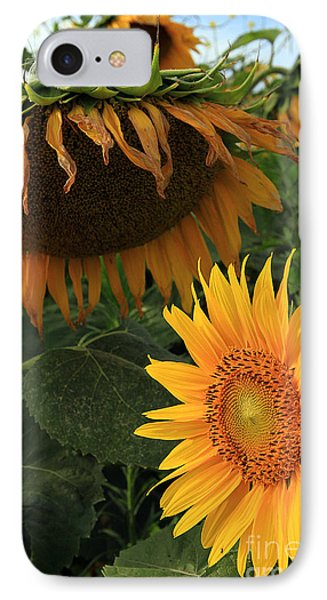 Sun Flowers  Past  And  Present  IPhone Case by Paula Guttilla