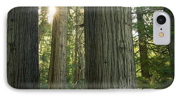 Sun In The Cedars Phone Case by Idaho Scenic Images Linda Lantzy
