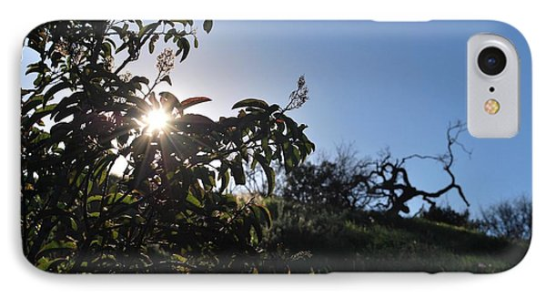 IPhone Case featuring the photograph Sun Shines Through The Greenery by Matt Harang