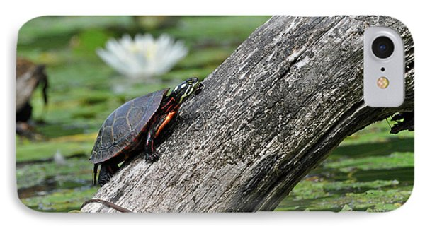 IPhone Case featuring the photograph Turtle Sunbathing by Glenn Gordon