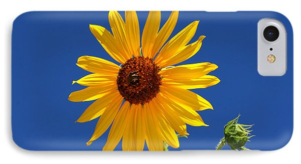 Sunflower Against Blue Sky IPhone Case by Tracie Kaska