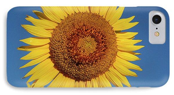 Sunflower And Blue Sky Phone Case by Nancy Landry