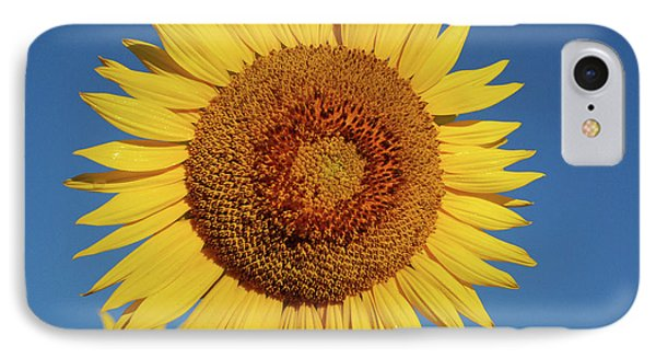 Sunflower And Blue Sky IPhone Case by Nancy Landry