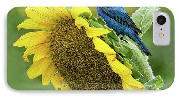 Sunflower Blue IPhone Case