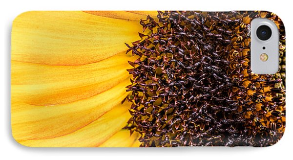 Sunflower Closeup IPhone Case by Bob Orsillo
