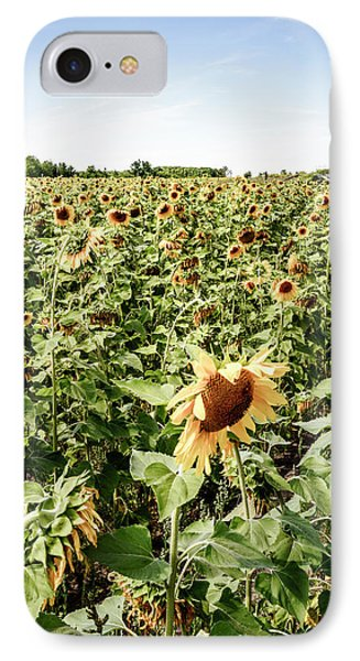 IPhone Case featuring the photograph Sunflower Field by Alexey Stiop
