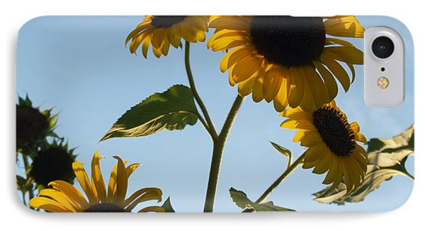 Sunflower Gang From Below Phone Case by Anna Lisa Yoder