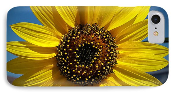 Sunflower Glow IPhone Case by Loriannah Hespe