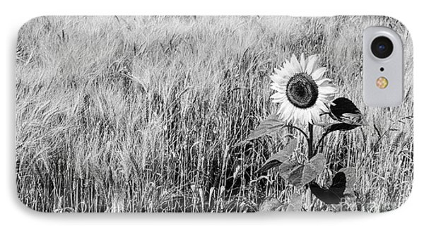 Sunflower In A Field Of Wheat IPhone Case