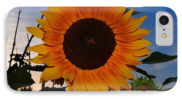 Sunflower In The Evening IPhone Case
