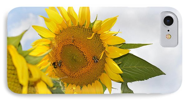 Sunflower IPhone Case by Linda Geiger