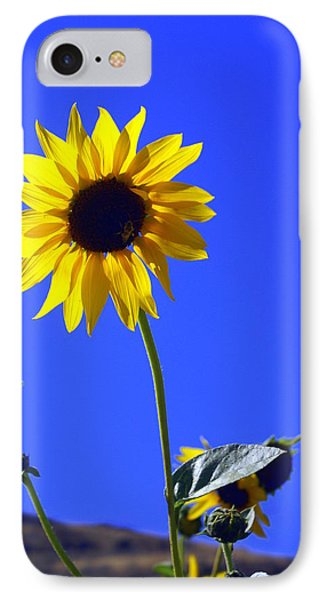 Sunflower Phone Case by Marty Koch