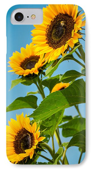 Sunflower Morning IPhone Case by Debbie Karnes