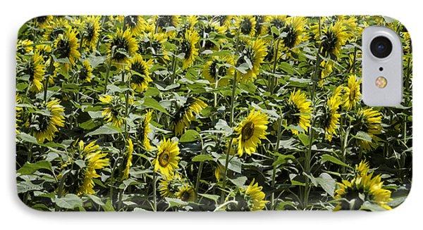Sunflower Patterns IPhone Case